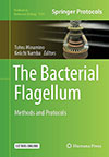 The Bacterial Flagellum: Methods and Protocols(分担執筆)